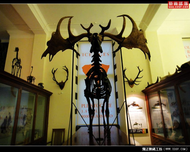 剑桥大学动植物博物馆的标本.jpg